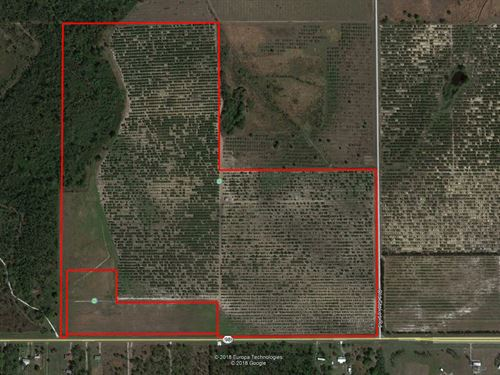 120 Acre Grove On Hwy 98 W : Frostproof : Polk County : Florida