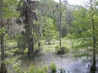 Macon County - 139.7 Acres : Shorter : Macon County : Alabama