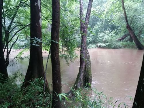 River Frontage And Valuable Timber : Clayton : Barbour County : Alabama