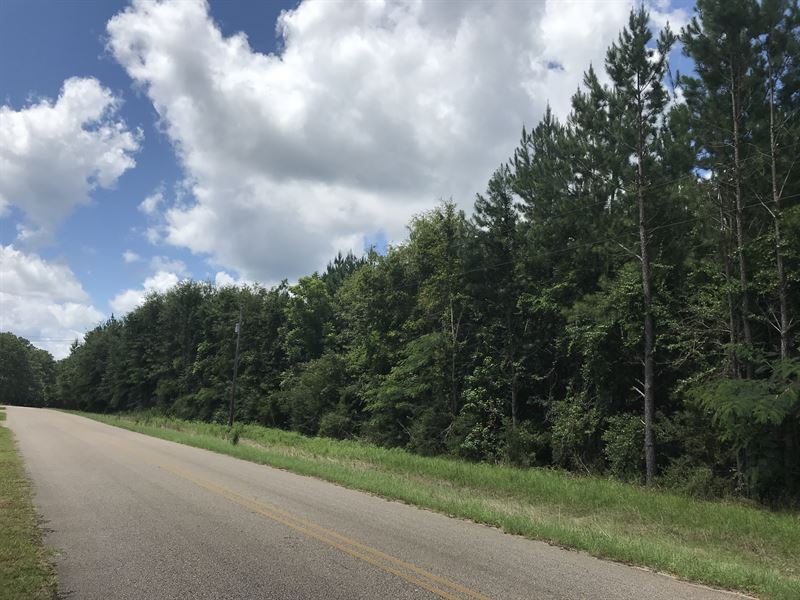 County Road 35 Tract : McKenzie : Covington County : Alabama