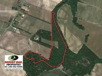 26.57 Acres of Hunting Land For Sa : Trenton : Jones County : North Carolina