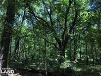 Yemassee Small Wooded Parcel : Yemassee : Hampton County : South Carolina