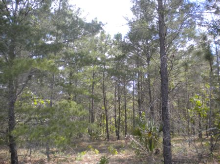 36.8 Ac, Able To Subdivide : Brooksville : Hernando County : Florida