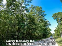 5.4 Acres In Polk County : Livingston : Polk County : Texas
