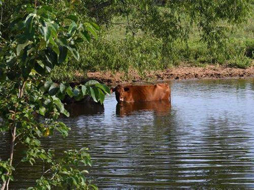 80 Acre Cattle/Horse Farm For Sale : Jacksonville : Pulaski County : Arkansas