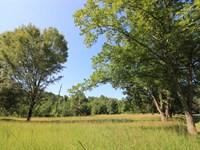 Mix Of Pine - Hardwood & Pear Trees : Madison : Morgan County : Georgia