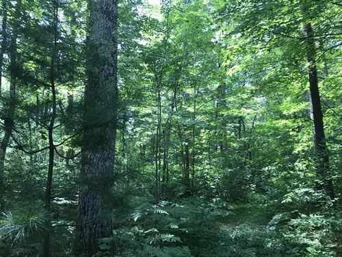 172885 40Ac Wooded Parcel Off Cth D : Lac Du Flambeau : Vilas County : Wisconsin
