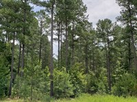 Rare Timber Investment Opportunity : Warrenton : Warren County : Georgia