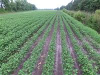 Farmland For Sale Washington Co. Nc : Plymouth : Washington County : North Carolina