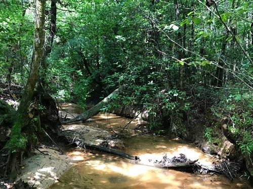 West Sepulga River Tract - 80 Acres : Evergreeen : Conecuh County : Alabama