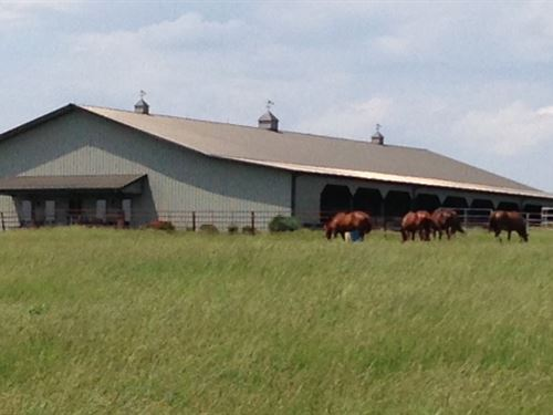 Cattle, Horses, Organic Farm : Polo : Caldwell County : Missouri