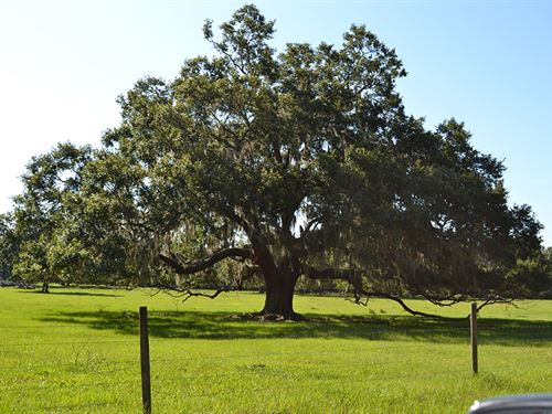 English Creek Development Land : Lakeland : Polk County : Florida