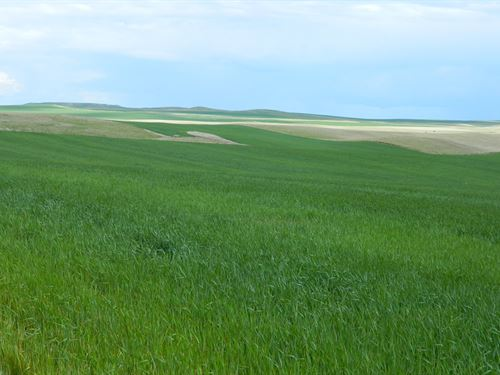 Perkins County Cropland : Ralph : Perkins County : South Dakota