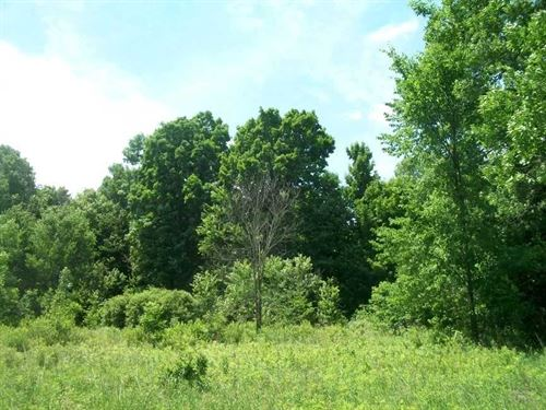 80 Acres, Sheldon, Taylor County : Sheldon : Taylor County : Wisconsin