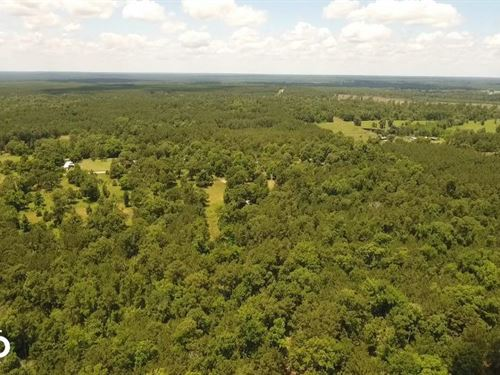 41 Acre Recreational Homesite : Corrigan : Polk County : Texas