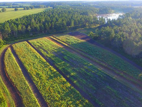 196 Acres Farm, Ag, Lake, Timber : Cobbtown : Tattnall County : Georgia