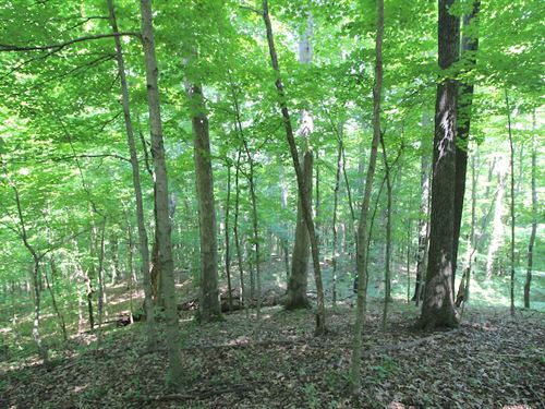 Tr 135, 33 Acres : Logan : Perry County : Ohio