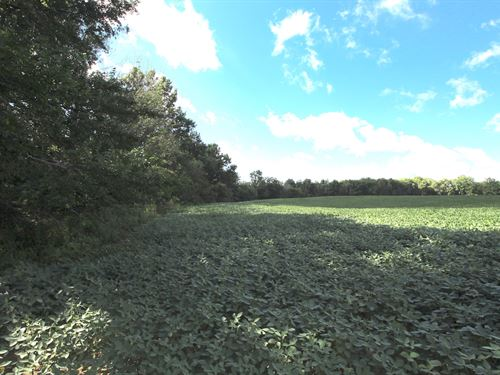 Fleming Falls Rd Lot 4, 5.8 Acres : Mansfield : Richland County : Ohio