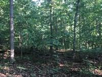 39 Acres Of Timberland In Camde : Decaturville : Camden County : Missouri