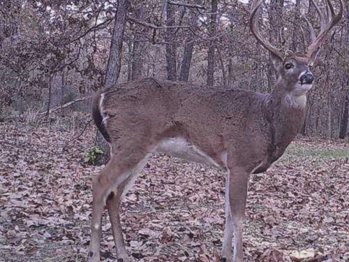 Neosho 137 : Neosho : Newton County : Missouri