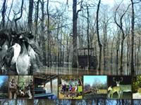 Premier Duck & Deer Listing : Holcomb : Grenada County : Mississippi