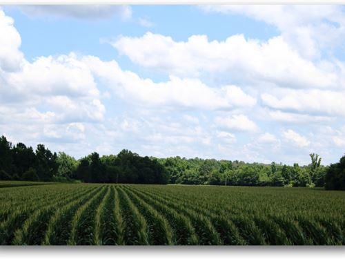 93 Acres In Montgomery County : Kilmichael : Montgomery County : Mississippi