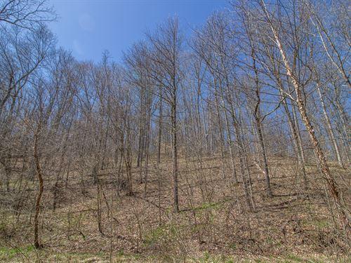 Brady Creek - 140 Acres : South Webster : Scioto County : Ohio