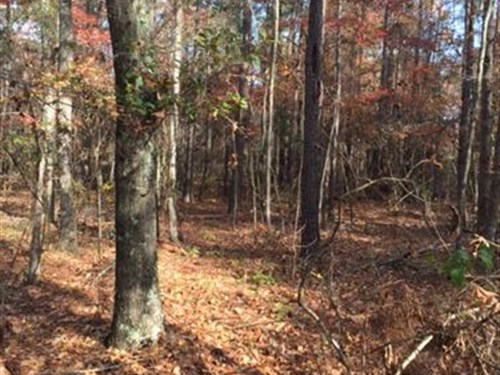 Beautiful Wooded Building Lot : Gray : Jones County : Georgia