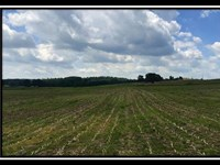5 & 1/4 Acres Estate Homesite : Glenford : Licking County : Ohio