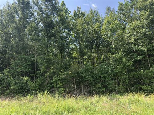 Land For Sale Beaufort County North : Pinetown : Beaufort County : North Carolina