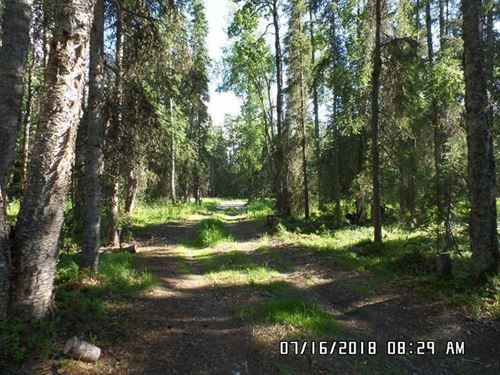 Vacant 9.56 Heavily Wooded Acres : Kenai : Kenai Peninsula Borough : Alaska