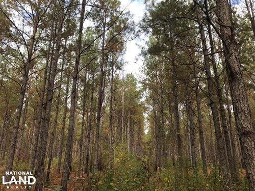 Tombigbee River Bottom Recreational : Macon : Noxubee County : Mississippi