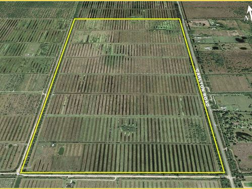 325 Acres Agricultural Land : Port St Lucie : St. Lucie County : Florida
