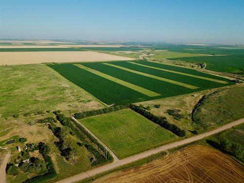North East Colorado Upland Paradise : Holyoke : Phillips County : Colorado