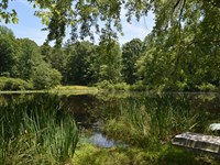 Multi-Use Land Auction : Montross : Westmoreland County : Virginia