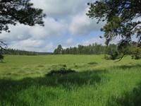 Limestone Property : Hill City : Pennington County : South Dakota