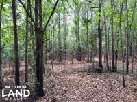 Marion County Hunting Tract : Buena Vista : Marion County : Georgia