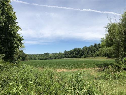 102 Acres In Metcalfe County, Ky : Summer Shade : Metcalfe County : Kentucky