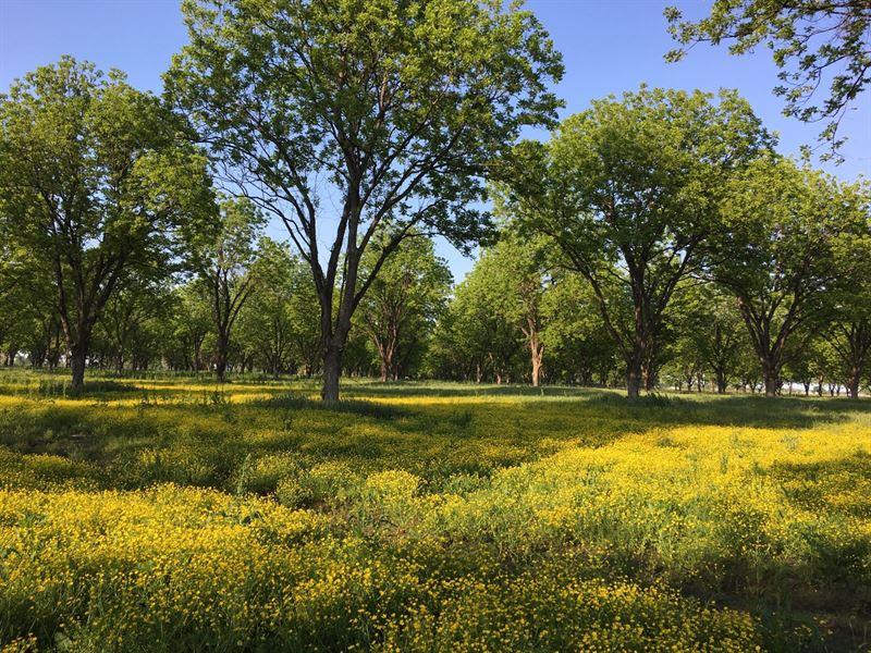 Beautiful Pecan Orchard : Manila : Mississippi County : Arkansas