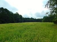 Pasture, Turkeys, & Hardwoods : Elberton : Elbert County : Georgia