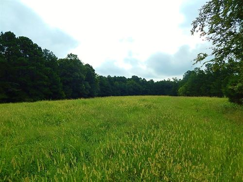 Pasture, Turkeys, & Hardwoods : Elberton : Elbert County : Georgia