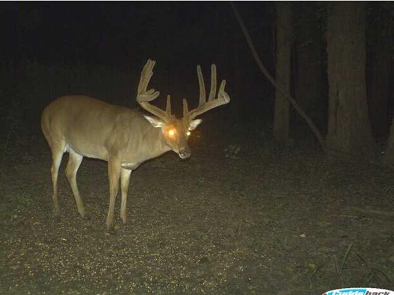 Diamond Island Hunting Membership : Tallulah : Madison Parish : Louisiana