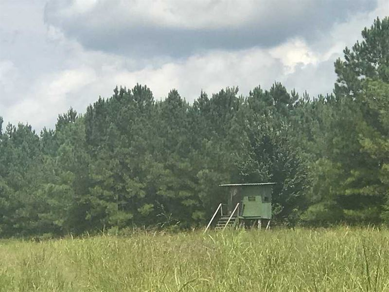 New Price, Excellent Hunting Land : Farm for Sale : Eutaw : Greene County :  Alabama