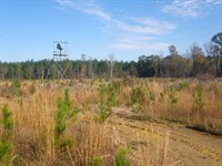 White Hall Tract : Tyler : Lowndes County : Alabama