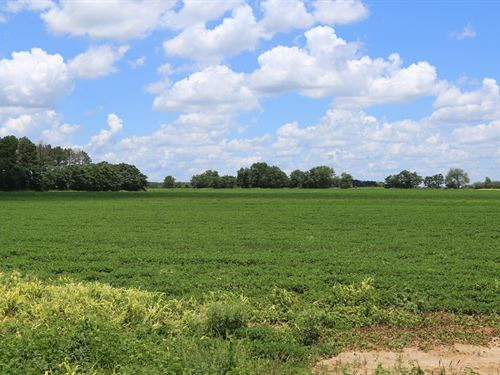 218 Acres Farmland, Mature Timber : Newville : Henry County : Alabama