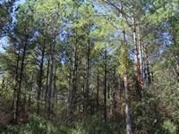 Rogersville's Treasure Forest : Rogersville : Lauderdale County : Alabama
