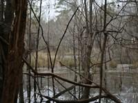 Line Creek Hardwood Tract : Pike Road : Montgomery County : Alabama