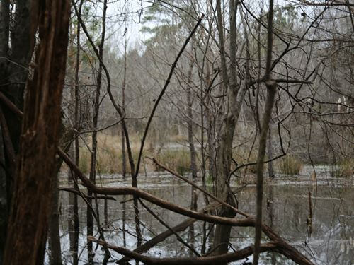 Line Creek Hardwood Tract : Pike Road : Montgomery County : Alabama