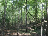 Barefield Road Tract : Naftel : Montgomery County : Alabama