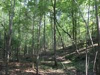 Barefield Road Tract : Naftel : Montgomery County : Alabama